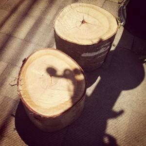 欅の丸太、頂きました。